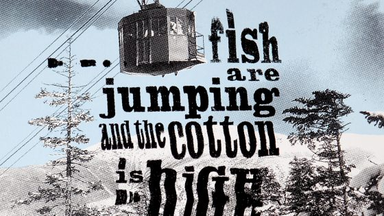 …fish are jumping and the cotton is high
